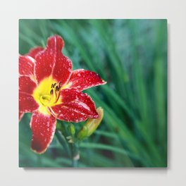 Lily Rain Drops in Red - A macro image with bokah Metal Print