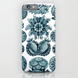 Ernst Haeckel Sea Squirts Cerulean iPhone Case