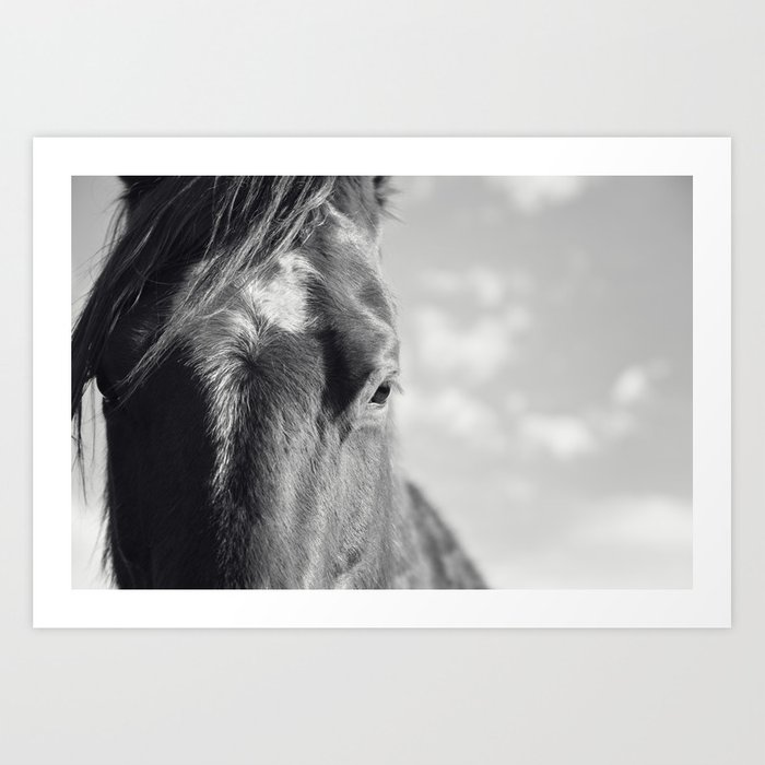 Picture Poster Animal Close View of a Black /& White Horses Face Framed Print