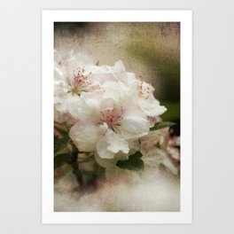Blossom in Springtime Art Print