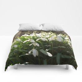 Snowdrops Comforters