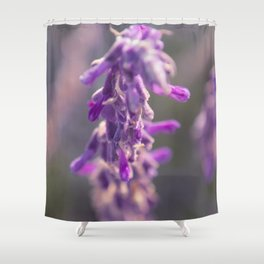 Fine Art Lavender Flower Purple Toned Floral Nature Wall Art Print Shower Curtain
