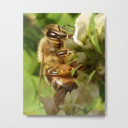 Fuzzy Bee Metal Print