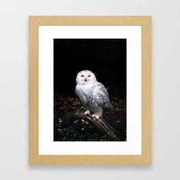 Majestic winter snowy owl Framed Art Print