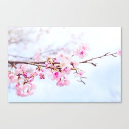 Japanese cherry-blossom tree, 'Oh-kanzakura' Canvas Print