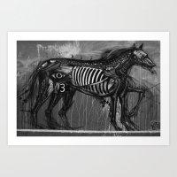 Animal Skeleton Art Print