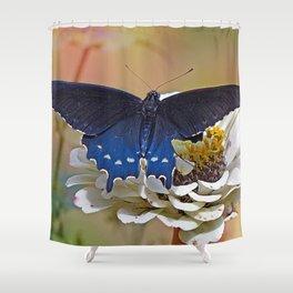 Spicebush Swallowtail Shower Curtain