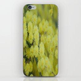 Silver Wattle iPhone Skin