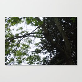 A Thousand Stories Tall. Canvas Print