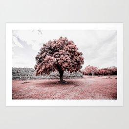 Dzibilchaltun Tree Art Print
