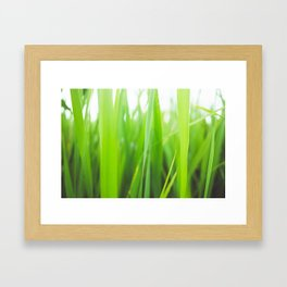 Summer is green Framed Art Print