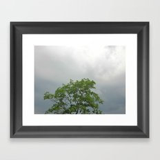 Lonely As A Tree Framed Art Print