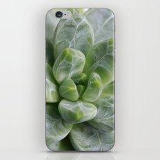 Succulent Pachyphytum iPhone & iPod Skin