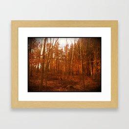 Orange Trees Framed Art Print