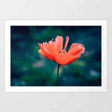 Lonely poppy Art Print