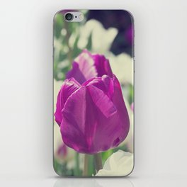 Violet white flowers greeting of tulips iPhone Skin