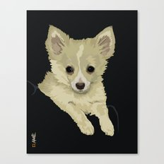 Long Hair Chihuahua Canvas Print