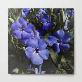 Wonderland Blue Metal Print
