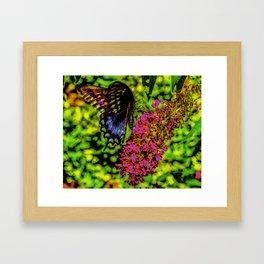 Mongrove Skipper Butterfly Framed Art Print