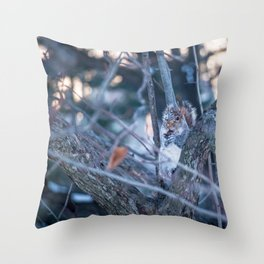 Squirrel eating on sunset during winter Throw Pillow