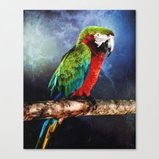 Mister Macaw Canvas Print