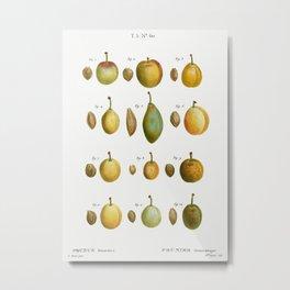 Common plums, Prunus domesticafrom Traité des Arbres et Arbustes que l'on cultive en France en plein Metal Print