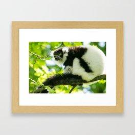 Black-and-white Ruffed Lemur Framed Art Print
