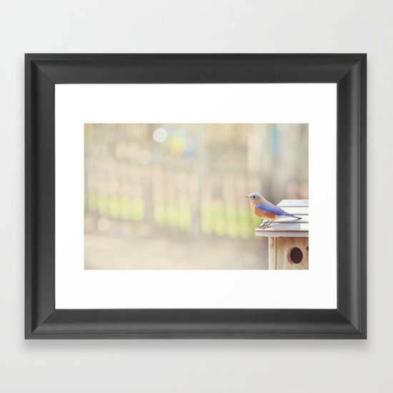 Bluebird Morning Framed Art Print