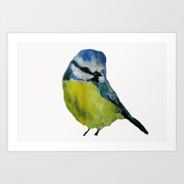 Wild English Garden Bird Blue Tit Contemporary Acrylic Painting White Edit Art Print