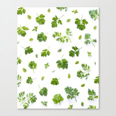 Herbs on White - Portrait Canvas Print