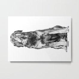 Rotweller Metal Print