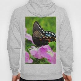 Swallow Tail Butterfly Hoody