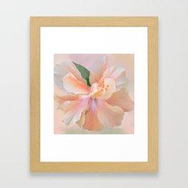 PEACH HIBISCUS Framed Art Print