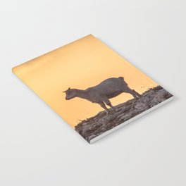 Goat baby sunset E5-5789 Notebook