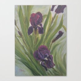 Winter Iris Canvas Print