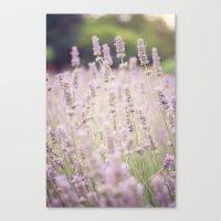 lavender Canvas Prints featuring lavender by Sarah Brust