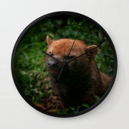 Bush Dog Wall Clock