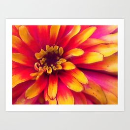 Close Up Flower Art Print