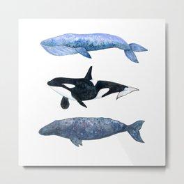 Watercolor Whale Pod Metal Print