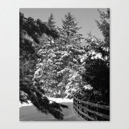Evergreen Brilliance Canvas Print