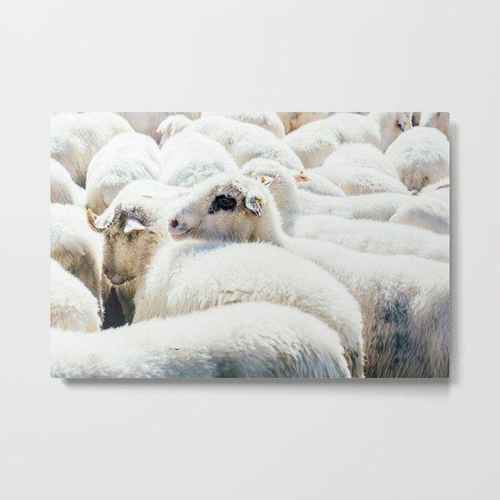 Sheep Flock Metal Print