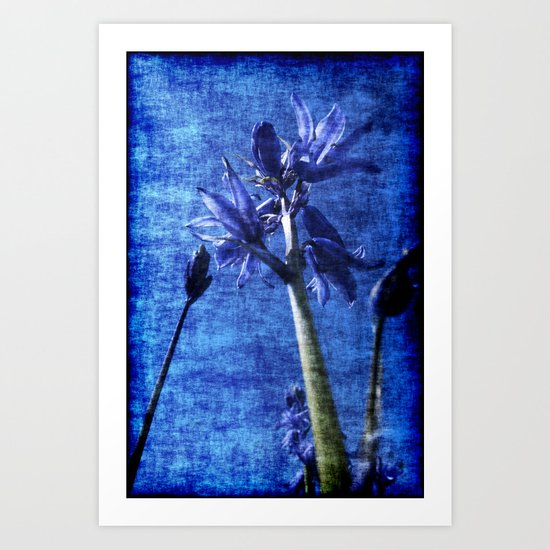 Bluebell Denim Art Print