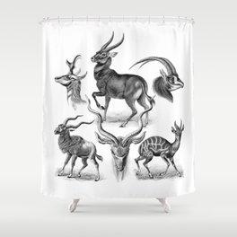 Ernst Haeckel's Antilopinae Shower Curtain