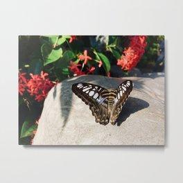 Striking Butterfly Metal Print