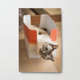 The cute cat in the box Metal Print