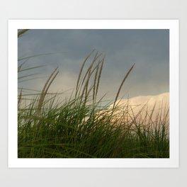 Windy // Nature Photography Art Print