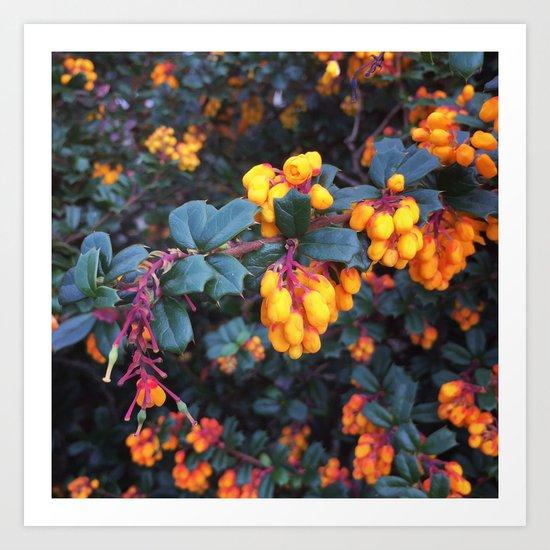 Orange Buds Art Print