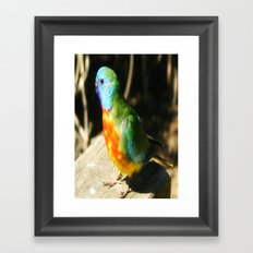 Australian Native Birds Framed Art Print