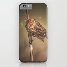 Red-winged Blackbird Slim Case iPhone 6s