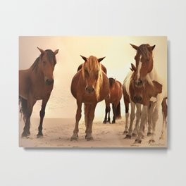 Beached Ponies - Group Metal Print